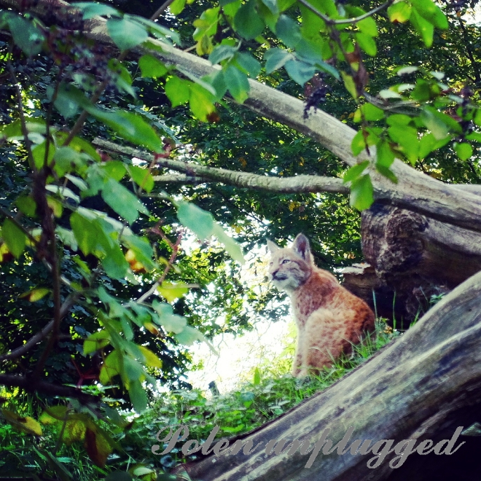 zoo-breslau-wroclaw-2